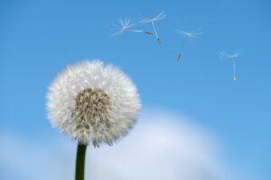 ¿Por qué se produce la  Alergia?